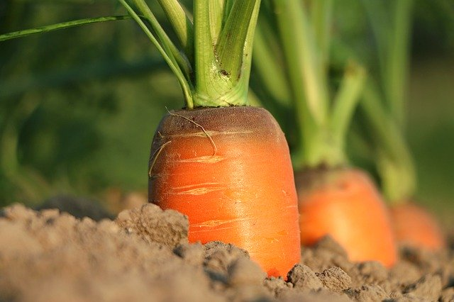 carrot-vitamins and supplements